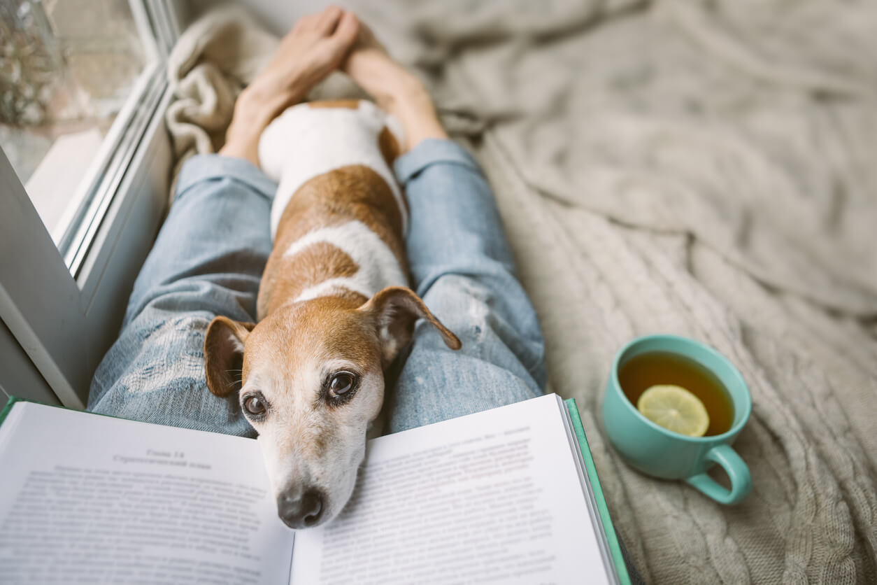 reading at home with dog self care